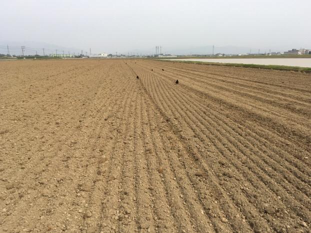福井県産「夏の新そば2016」の播種(はしゅ)が福井市内の圃場(ほじょう)で始まりました。