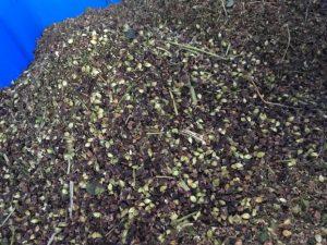 2016年度ふくい夏の新そば入荷まもなく!夏そばの収穫が始まり、乾燥調製に大忙しです。