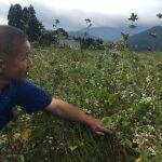[2016年秋そば生育状況] 福井県大野市で大野在来種を有機無農薬(オーガニック)で栽培する農家さんに圃場を案内してもらいました。