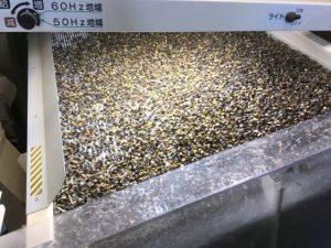 【令和元年】福井夏の新そば収穫真っ盛り!