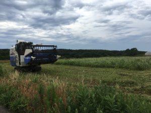 【令和元年】福井夏新そばの収穫が始まりました。乾燥調製を経て6月下旬には弊社に入庫予定です。