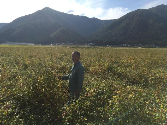 令和元年 福井県大野市で大野在来種を有機無農薬栽培するそば圃場では、刈り取り作業が始まりました。